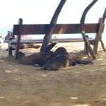 actividades gratis que puedes hacer en Isabela en Galápagos