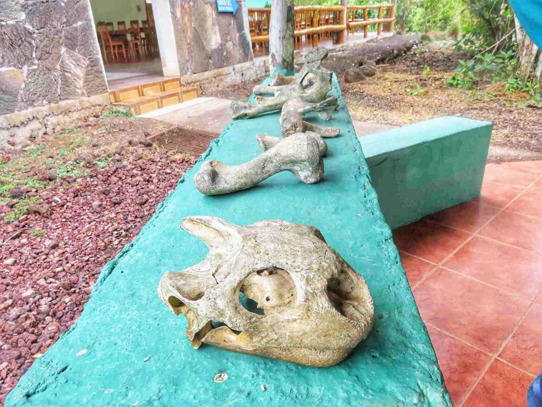 reserva de tortugas en santa cruz galápagos