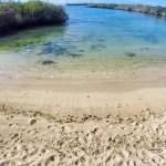 actividades gratis que puedes hacer en santa cruz en galápagos