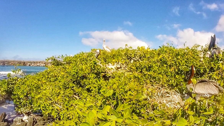Playa Los Alemanes en Santa Cruz