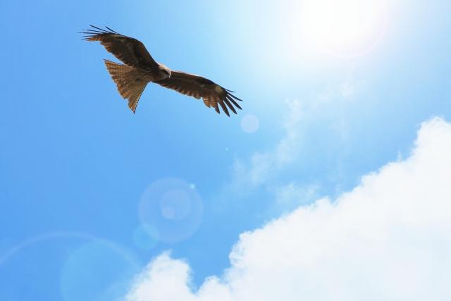 FX チャート パターン ダブルボトム ネックライン 鳥の目 虫の目 俯瞰