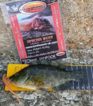 Corkwing Wrasse for Species Hunt