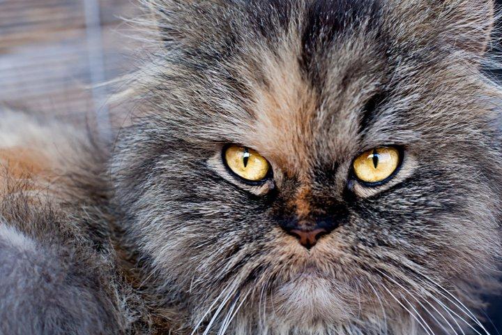 foto mascota 10 lightangel Pedro J Justicia - Album para mascota o con mascota -