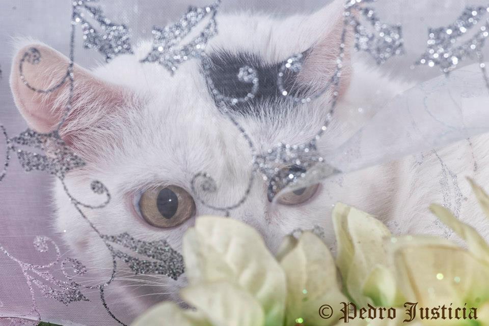 foto mascota 14 lightangel Pedro J Justicia - Album para mascota o con mascota -