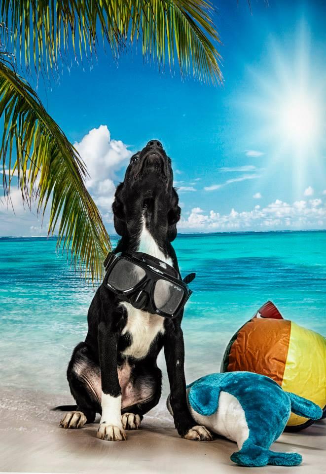 foto mascota 21 lightangel Pedro J Justicia - Album para mascota o con mascota -