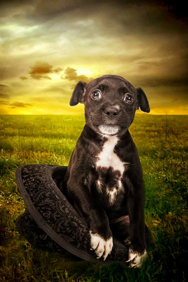 foto mascota 22 lightangel Pedro J Justicia - Album para mascota o con mascota -