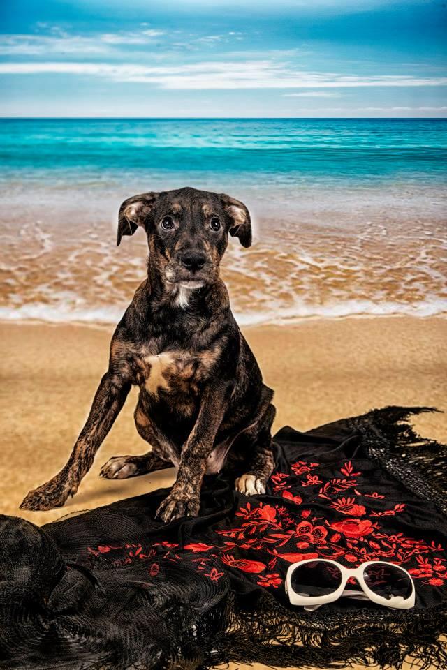 foto mascota 32 lightangel Pedro J Justicia - Album para mascota o con mascota -