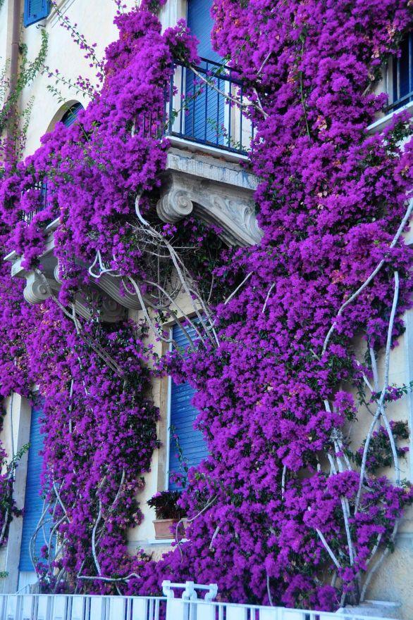 Colors of Monterossa