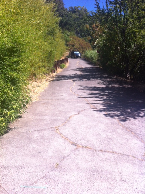 The driveway to our old house in San Anselmo. I remember it as much longer and it was unpaved then. Wish I could just walk up and in through the back door.