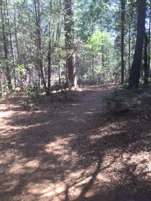 A favorite training walk: Empire Mine in Grass Valley, CA