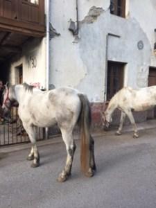 Horses in Las Herrerias