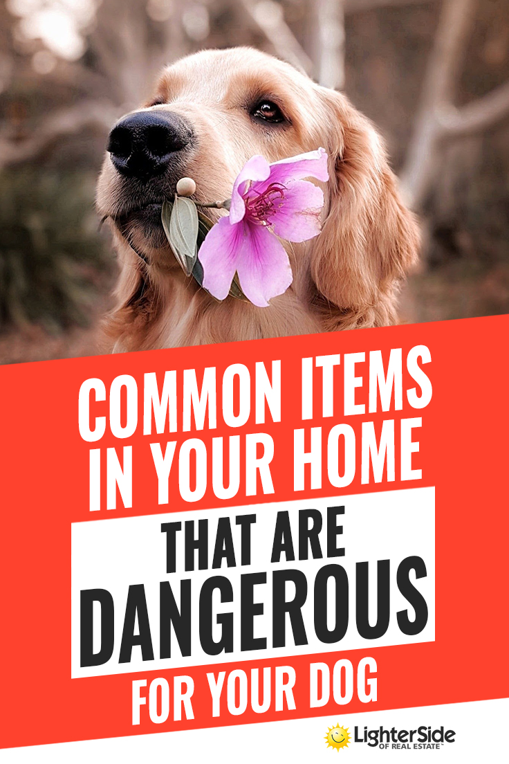 protect your pet! common household products that are dangerous for your dog Protect your pet! Common household products That Are Dangerous For Your Dog dangerous dog pinterest