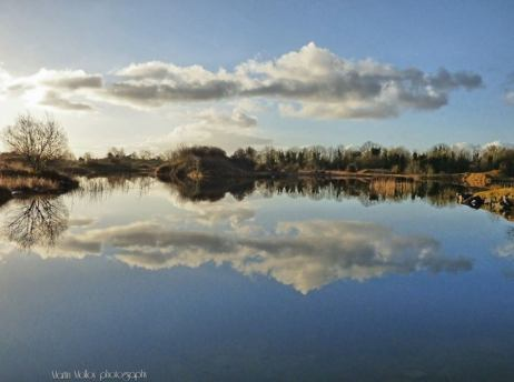MIRROR IMAGE Martin Molloy took this photograph at Gaurus, Ennis, County Clare https://www.facebook.com/pages/Martin-Molloy-Photography/1488270208089779
