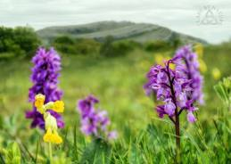 Burren. Pic Clare By Nature