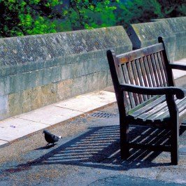 Dove and bench