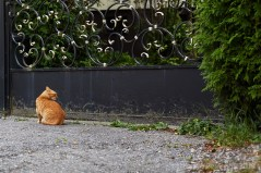 A cat waiting in front of a garden entrance in the east of Graz, Austria