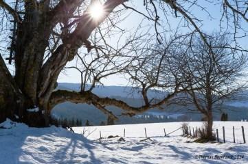 Backlight winter scene