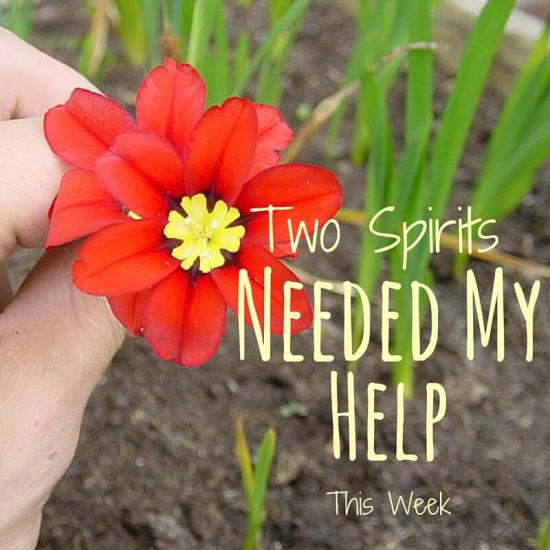 Two Spirit's Needed My Help This Week