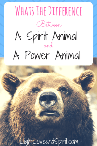 What Is The Difference Between A Spirit Animal And A Power Animal?