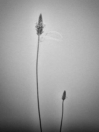 summergrasses1