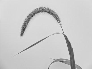 summergrasses6