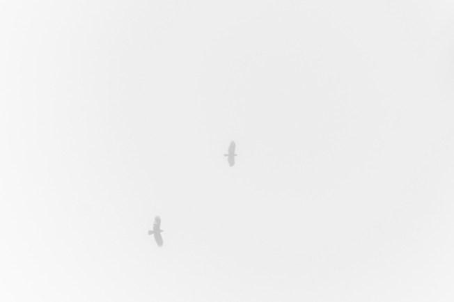 aerialboundaries6