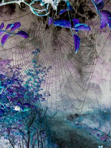 Inverted image of spider web photo, taken by Maureen McCauley Evans