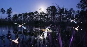 Dragonflies-4