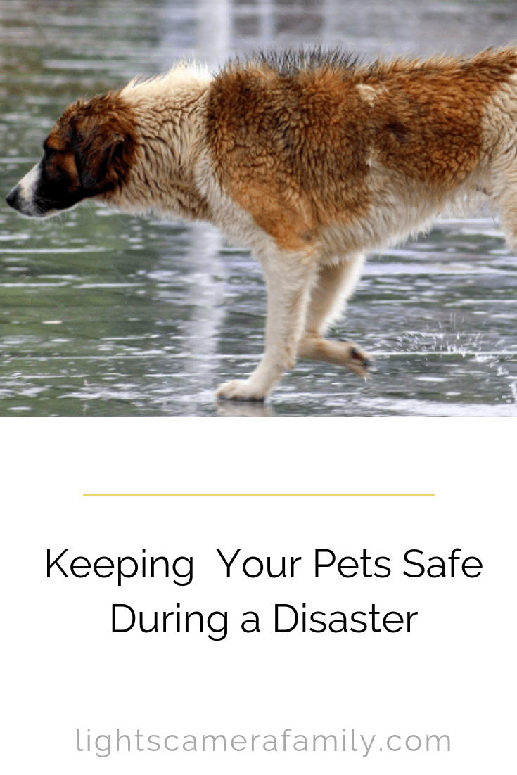 In certain disaster scenarios, there may be little time to evacuate. Here are tips to help keep your pets safe when disaster strikes!