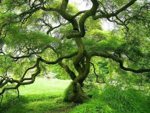 1415504_tree_of_life