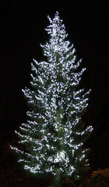 holiday-tree2-e1529856021880.jpg