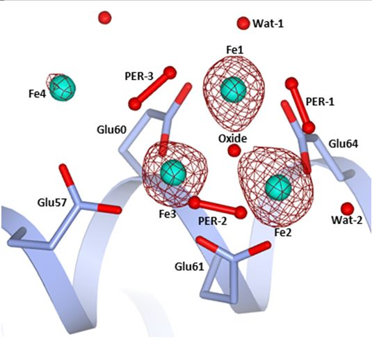 Chemistry at the protein-mineral interface