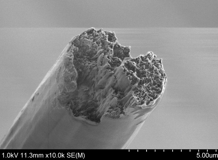 World's strongest bio-material outperforms steel and spider silk