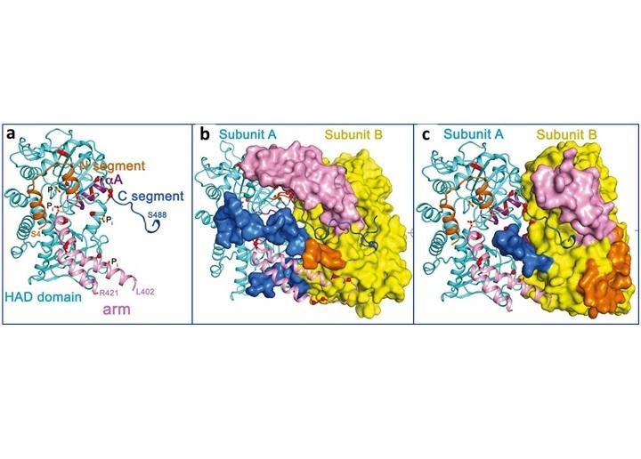 Mechanism of thiopurine resistance in acute lymphoblastic leukemia