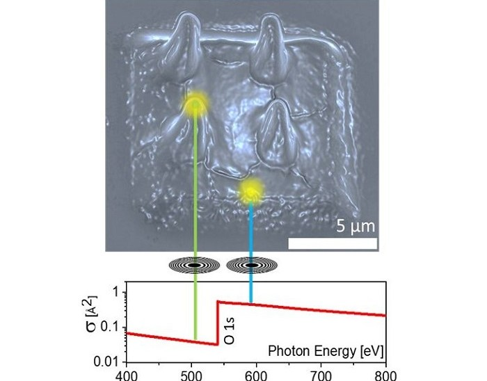 Electron and X‑ray Focused Beam-Induced Cross-Linking in Liquids: