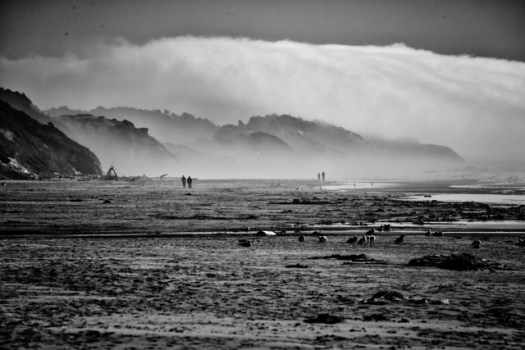 A fog bank hangs just offshore while birds search for food just below the tide line on Beverly Beach on the Oregon coast.