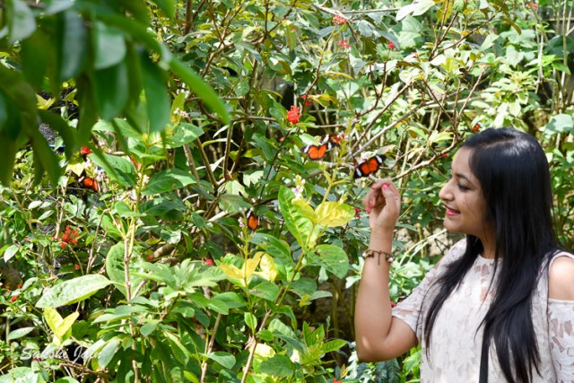 At Kemenuh butterfly park