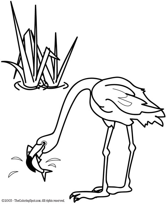 Flamingo Coloring Page 1 Audio Stories For Kids Free Coloring Pages Colouring Printables