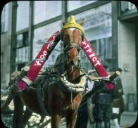 Horse, Moscow in 1931