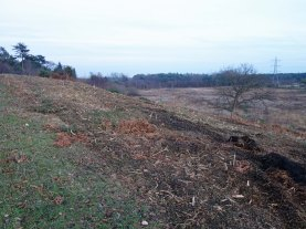 2-looking-over-folly-bog-after-scrub-removal