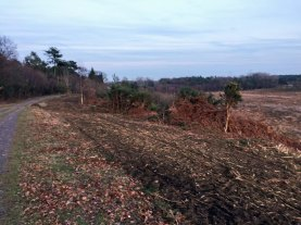 3-looking-over-folly-bog-after-scrub-removal