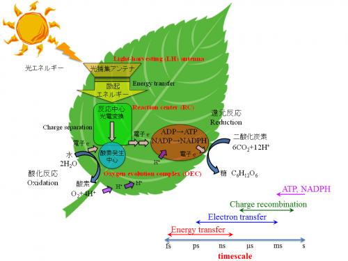 http://phys.ipps.kumamoto-u.ac.jp/kosumi/research.html