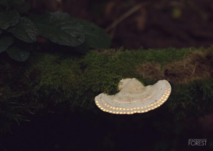Bio-luminescent Forest - Champignon-Ovni