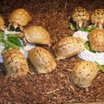 tartarughe a pranzo
