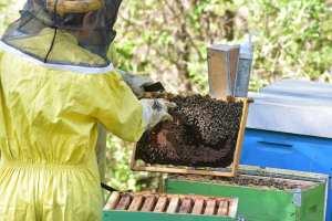 arnie api miele parco Beigua