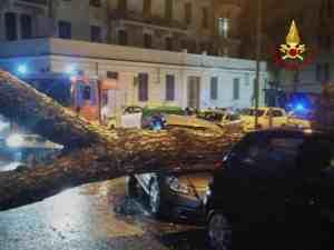 albero caduto La Spezia