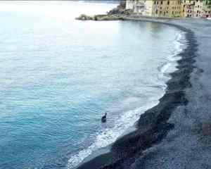 capriolo spiaggia Camogli
