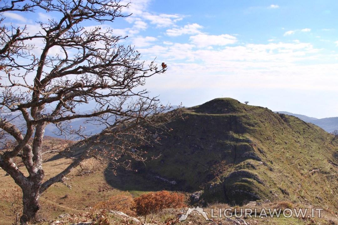 Monte Follia