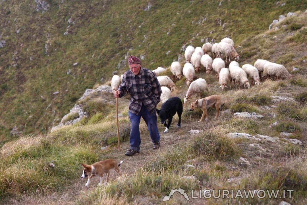 Giuanin Lanteri e le sue pecore brigasche al Sotto di San Lorenzo