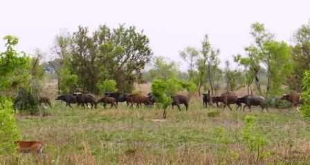 Pen15 buffalolauma